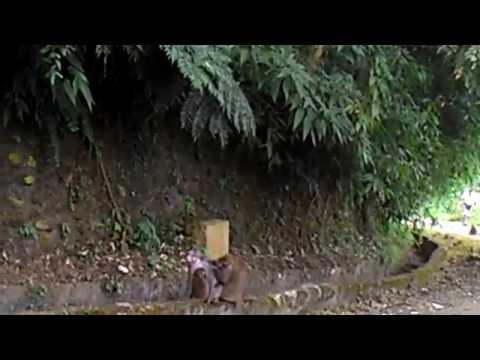 花蓮縣中正國小403佐倉步道健行~給猴子看4 - YouTube