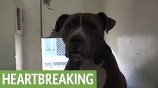 Dog given up to animal shelter cries tears of sadness