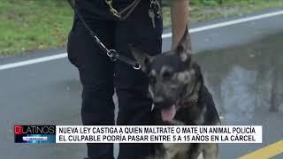 Nueva ley de protección a los animales policías (perros y caballos)