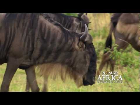 East Africa Highlights with Nomad Africa Adventure Tours