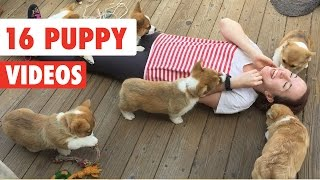 16 Funny Puppy Videos Compilation 2016