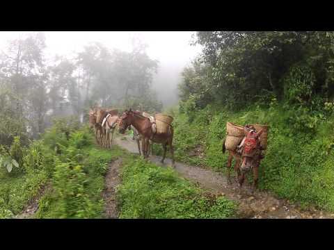 Donkey Caravan in Annapurna, Nepal