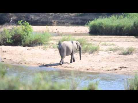 Random Video Clips from South Africa