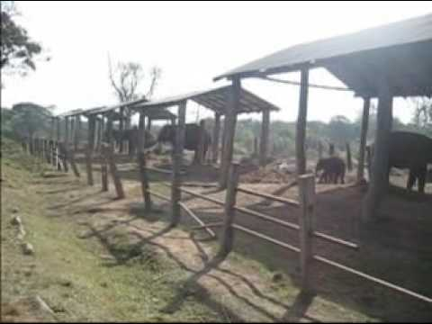 Chitwan adventure tour | Nepal Wildlfe | Elephant Safari | Jungle Walk | Canoeing