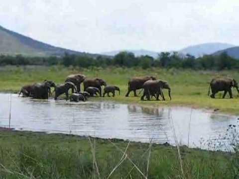 Elephants at Pilanesburg National Park, South Africa