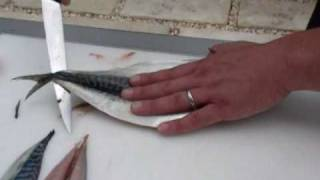 Passionate About Fish - How to fillet a Mackerel