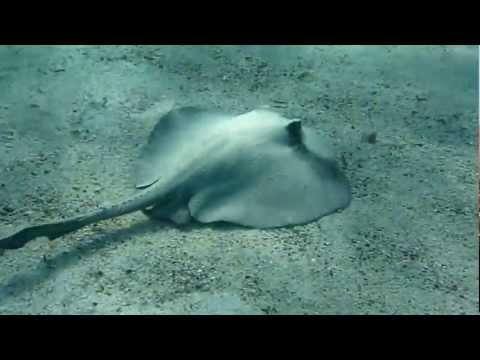 Ecuador Galapagos ray
