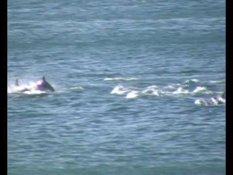 diaz beach dolphin migration