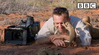 Magic meerkat moments - Planet Earth Live - BBC One