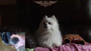 Naruto Fight Theme - Gabe the Dog - The Raising Fighting Spirit