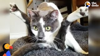 Special Cat Turns Guy Who Hated Cat into The Ultimate Cat Dad - SCOOTER | The Dodo width=