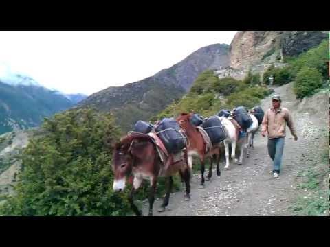 Annapurna Trekking – Donkey Traffic