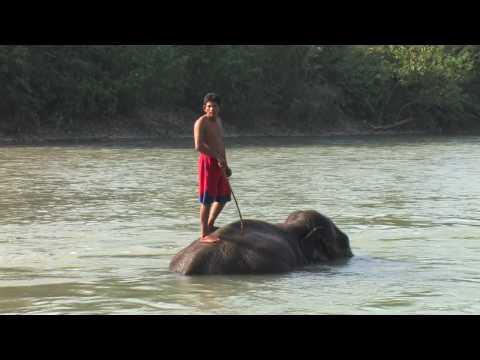 Royal Chitwan National Park Nepal