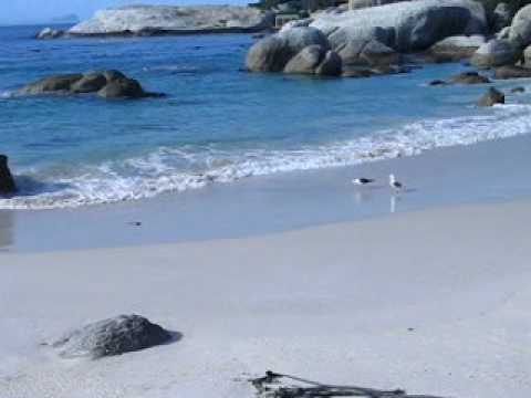 Penguins, Boulders Beach, Simon's Town in South Africa