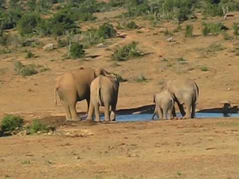 Martyna in Africa. South Africa. Elephants.avi