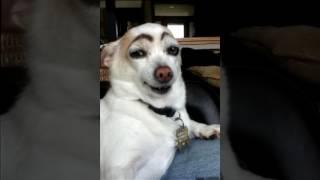 Montagem cachorro falante