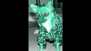 Physical Attractive Chihuahua (madonna physical atrraction)