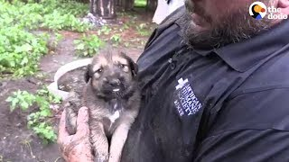 PUPPY RESCUE: You Won't Believe How Many Puppies Are Rescued From A Muddy Hole | The Dodo