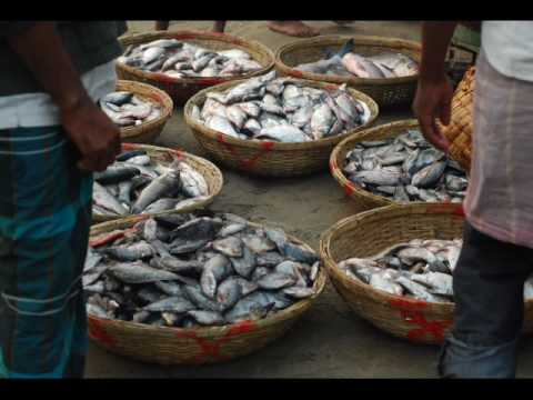 Bangladesh Dhaka Mawa Fish Market