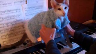 Skeezix the Cat's Piano Recital and Librace Impression