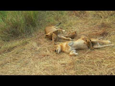 South African Safari… Montage