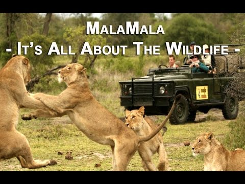 MALA MALA | Its' All About the Wildlife
