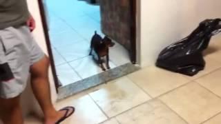 Bart o cão coragem