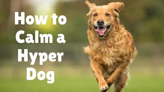 10 steps to calm dogs & hyper puppy | Why is my dog so hyper | Tips on high energy dogs activities