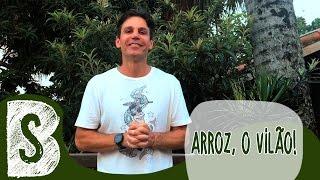 PAPO RETO - ARROZ, O VILÃO