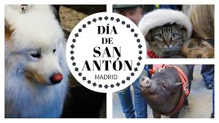 Día de SAN ANTÓN en Madrid, el patrón de los animales. Fiestas de San Antón MADRID 2017