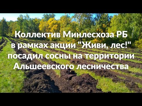 Коллектив Минлесхоза РБ в рамках акции