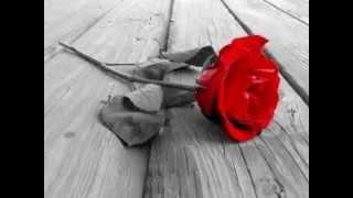 Rosa vermelha - Luiz de Carvalho