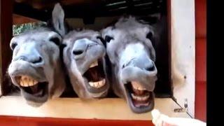 Zábavná Videa 2015 - Legrační Zvířata Dělat Legrační Zvuky Kompilaci