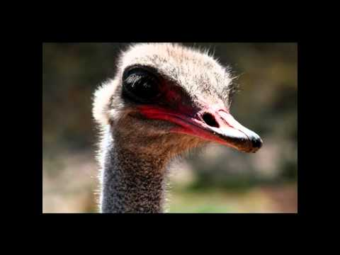 Day Trip To Karoo Ostrich Farm Cape Town SOUTH AFRICA