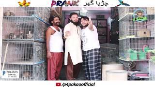 | CHIRYA GHAR PRANK | By Nadir Ali & Asim Sanata In | P4 Pakao | 2018 width=