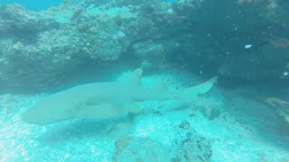 Diving in São Vicente, Cape Verde Islands