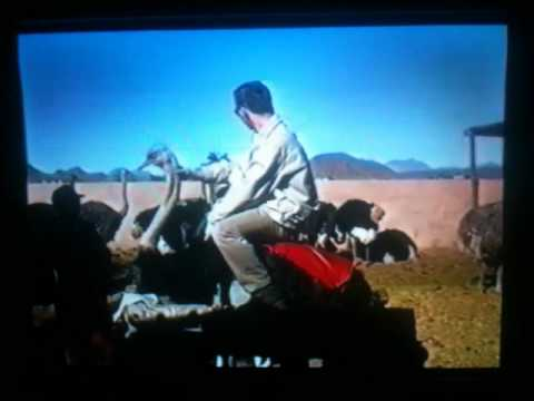 Ostrich Riding in South Africa (2000)