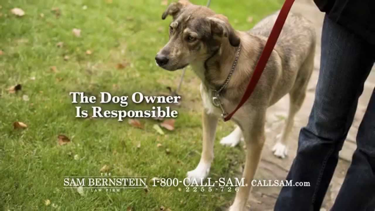 Dog Bite Attorney Angola NY Cost
