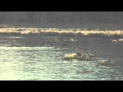 caribou-jamelia-caribouvideos