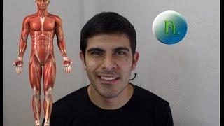¿Como estudiar los músculos del cuerpo?