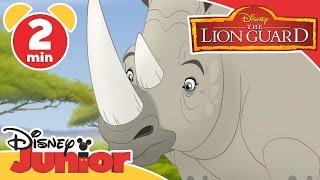 The Lion Guard | Tickbirds and Rhinos | Disney Junior UK