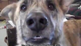 Cachorro Falante - Legendado