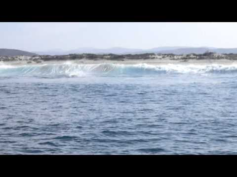 Dolphins Surfing the waves
