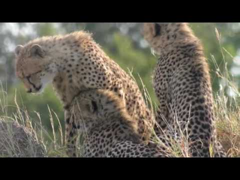 wild animals south africa , animaux afrique du sud , lantuejoul saintismus kruger mala mala
