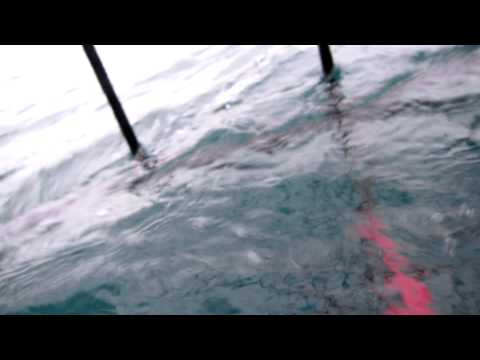 White Shark Cage Diving – Gansbaai/Kleinbaai, South Africa