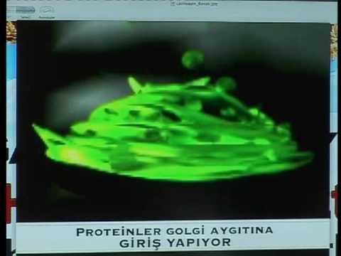 Hücrenin içindeki ambalaj sistemi.. Golgi aygıtı