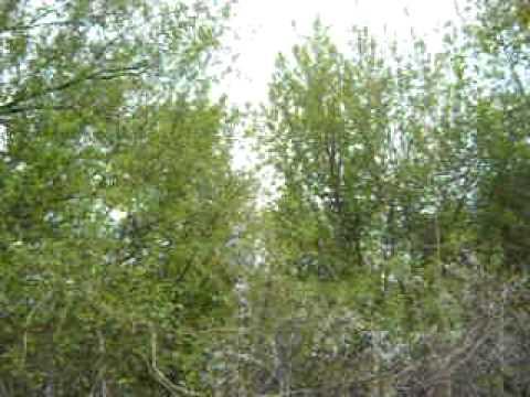 05.05.2011 Vidradne.Ukraine.Zaporizhzhya region.AVI