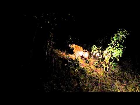 Singita Ebony Game Drive – Hyenas