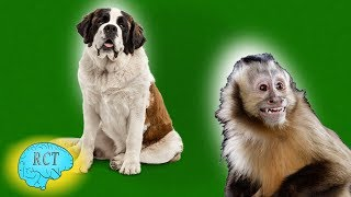 World's Most Catholic Animals