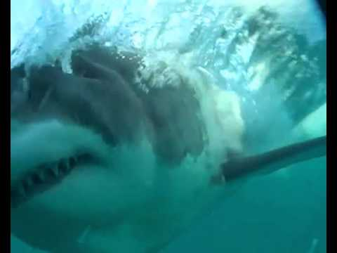 Shark Cage Diving, Gansbaai, South Africa